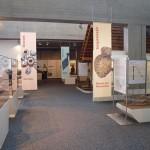 ©Naturhistorisches Museum Nürnberg